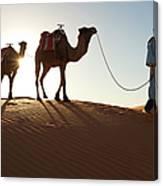 Tuareg Man & Camels, Erg Chebbi, Sahara Canvas Print
