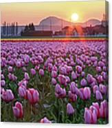 Tulip Field At Sunset Canvas Print