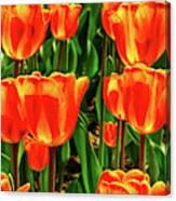 Tulips 2019d Canvas Print