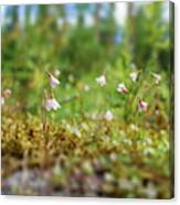 Twinflower Forest Canvas Print