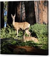 Two Deer Canvas Print