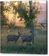 Two Deer Sunset Canvas Print