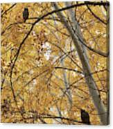 Two Owls In Autumn Tree Canvas Print
