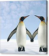 Two Penguins Holding Hands Canvas Print
