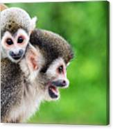 Two Squirrel Monkeys, A Mother And Her Canvas Print