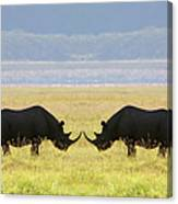 Two White Rhinoceros Face To Face On Canvas Print