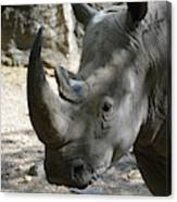 Up Close Look At The Face Of A Rhinoceros Canvas Print