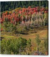Utan Autumn Canvas Print