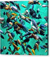 Various Multi-colored African Fish Canvas Print