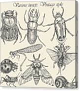 Vector Set Insects In Vintage Style Canvas Print
