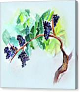 Vine And Branch Canvas Print