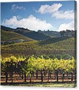 Vineyards Autumn Time In Sonoma Valley Canvas Print