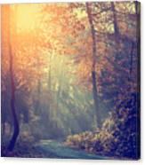 Vintage Photo Of Autumn Forest Canvas Print
