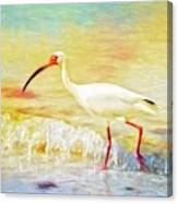 Walking The Waves Of Sanibel Canvas Print