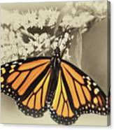 Wandering Migrant Butterfly Canvas Print