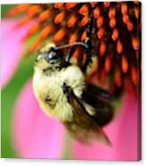 Water Drop On Bee Eye Canvas Print