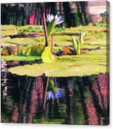 Water Lily 12 Canvas Print