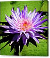 Water Lily 7 Canvas Print
