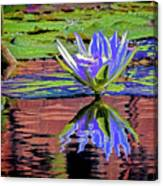 Water Lily10 Canvas Print