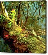 Water Log Canvas Print