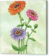 Watercolor Orange Pink Purple Zinnia Flowers Canvas Print