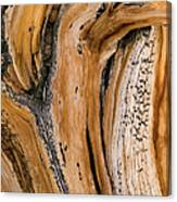 Weathered Wood Of Ancient Bristlecone Canvas Print