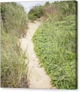 Wellfleet Sand Dunes Canvas Print