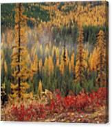 Western Larch Forest Autumn Canvas Print