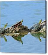 Western Painted Turtles Canvas Print