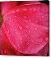 Wet Rose Petal Canvas Print