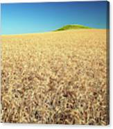 Wheat And Mounds Canvas Print