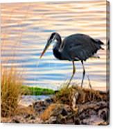 Wheeler Oregon - Great Blue Heron Canvas Print