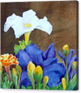 White And Purple Petunia And Marigolds Canvas Print