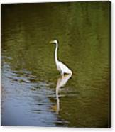 White Egret In Water Canvas Print