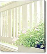 White Fence And Flowers Canvas Print