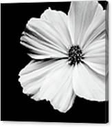 White Flower On Black Background Canvas Print