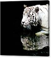 White Tiger In Water Canvas Print