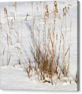 Whitehorse Winter Landscape Canvas Print
