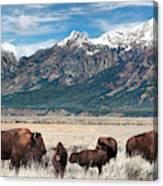 Wild Bison On The Open Range Canvas Print