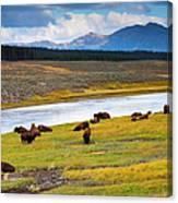 Wild Bison Roam Free Beneath Mountains Canvas Print