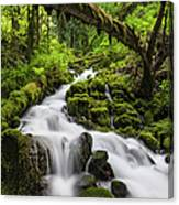 Wild Forest Waterfall Idyllic Green Canvas Print