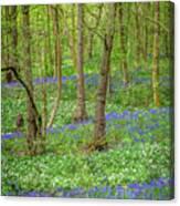 Wild Garlic And Bluebells Canvas Print