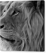 Wild Lion Face Canvas Print