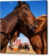Wild Mustangs In Navajo Nation Canvas Print