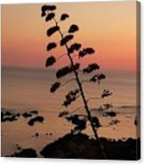Wild Sunset  Canvas Print