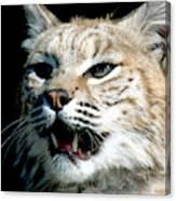 Wildcats Mascot 2 Canvas Print