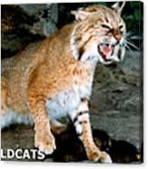 Wildcats Mascot 3 Canvas Print