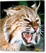 Wildcats Mascot 4 Canvas Print
