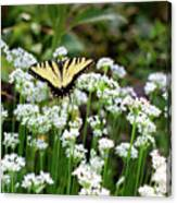 Wildflower Butterfly Canvas Print