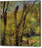 Willows 1885 Canvas Print